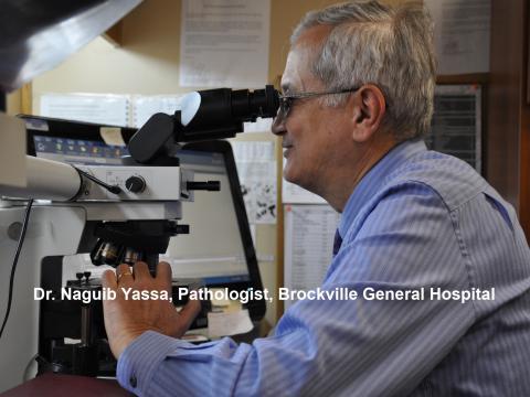 Dr. Naguib Yassa